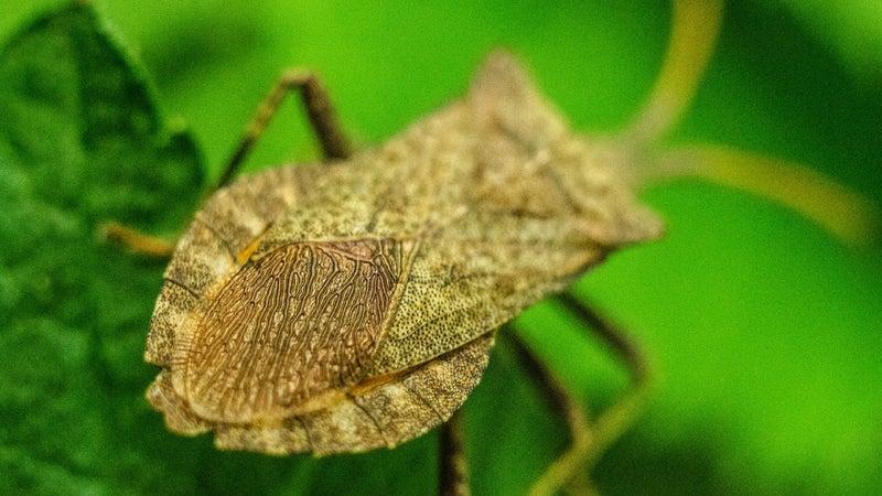 3 DIY bug traps that actually work