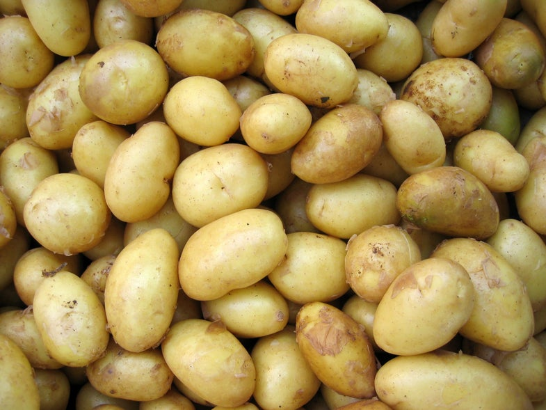 tons of potatoes