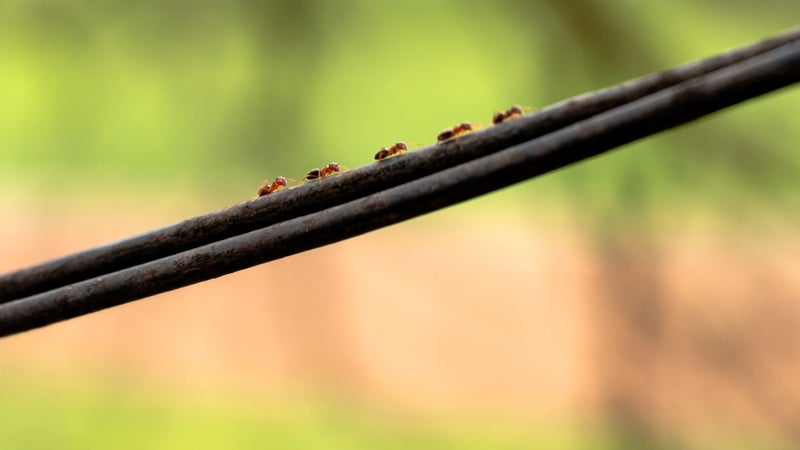 Fight ant infestations with these expert tips