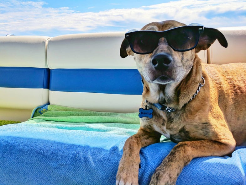 dog with sunglasses at the beach