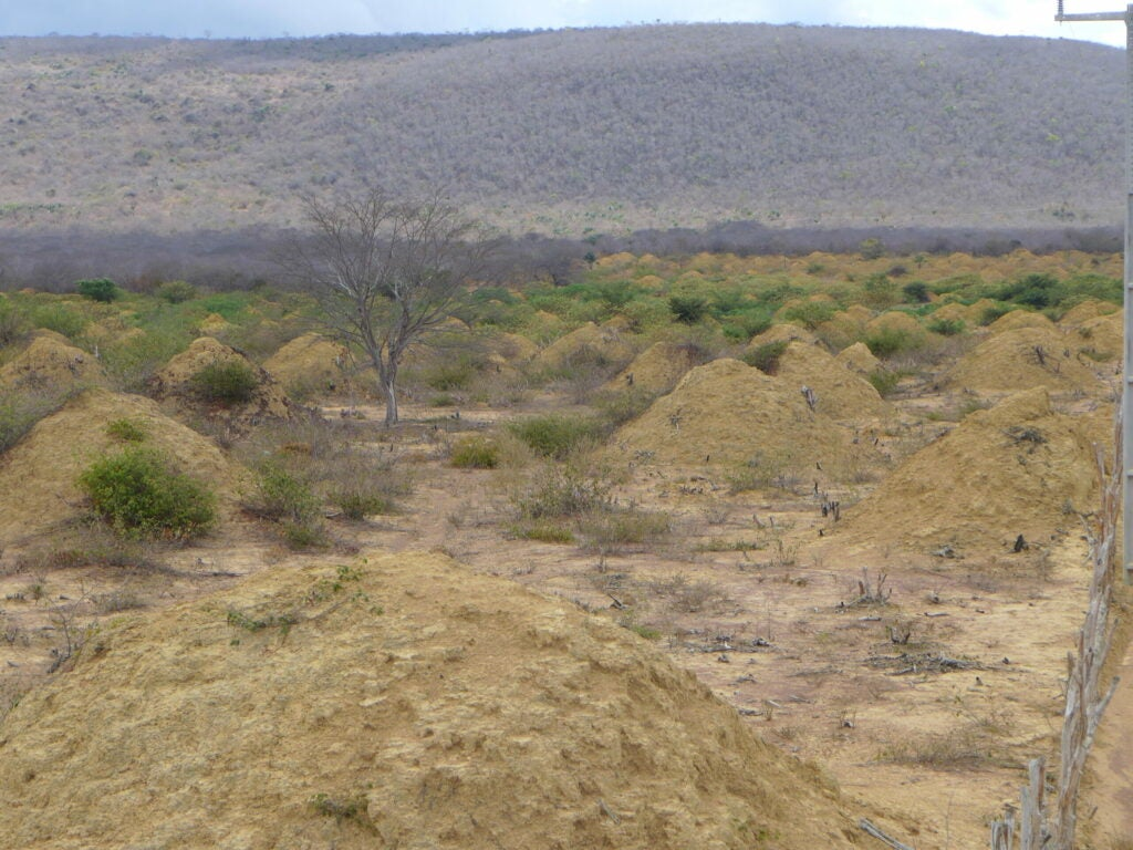 A field full of termite mounds