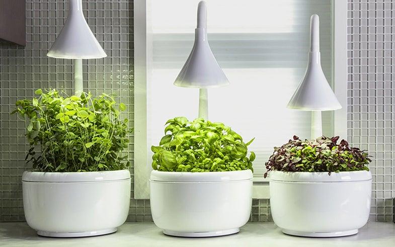 Smart Microgarden by SproutsIO