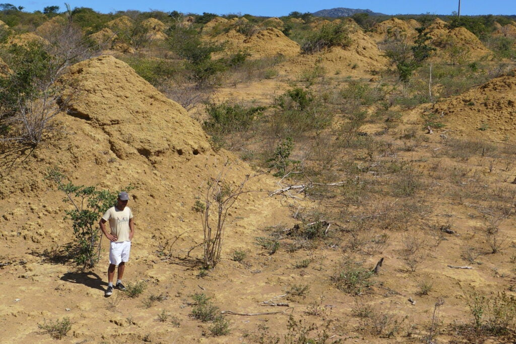 A man stands in front of a large termite mound