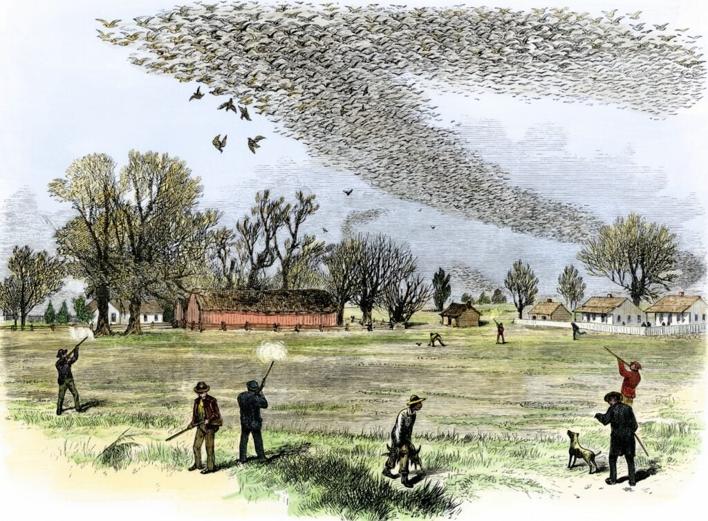 Pigeons blotting out sky