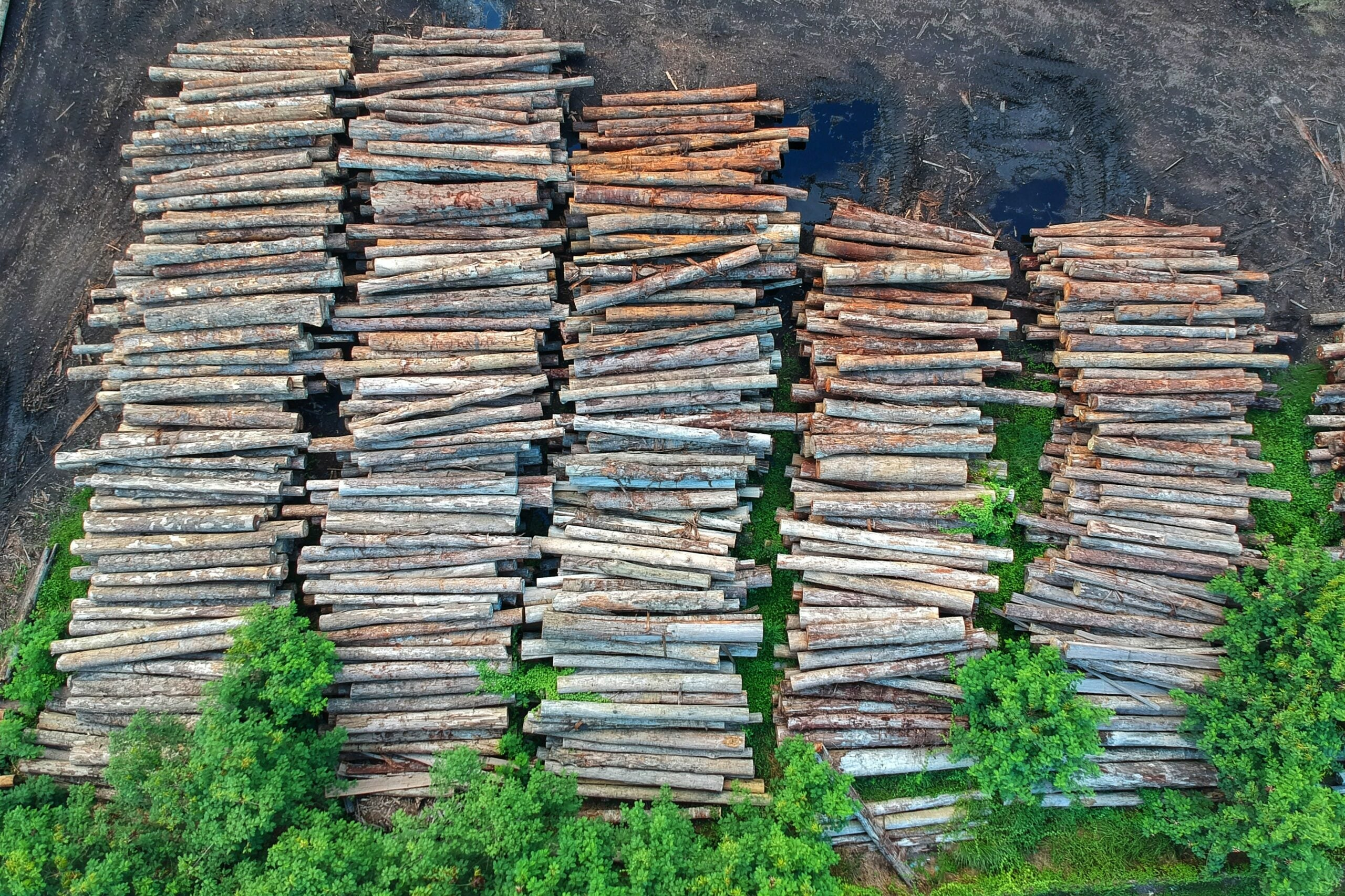 Gribble me this: What eats wood and poops clean energy?
