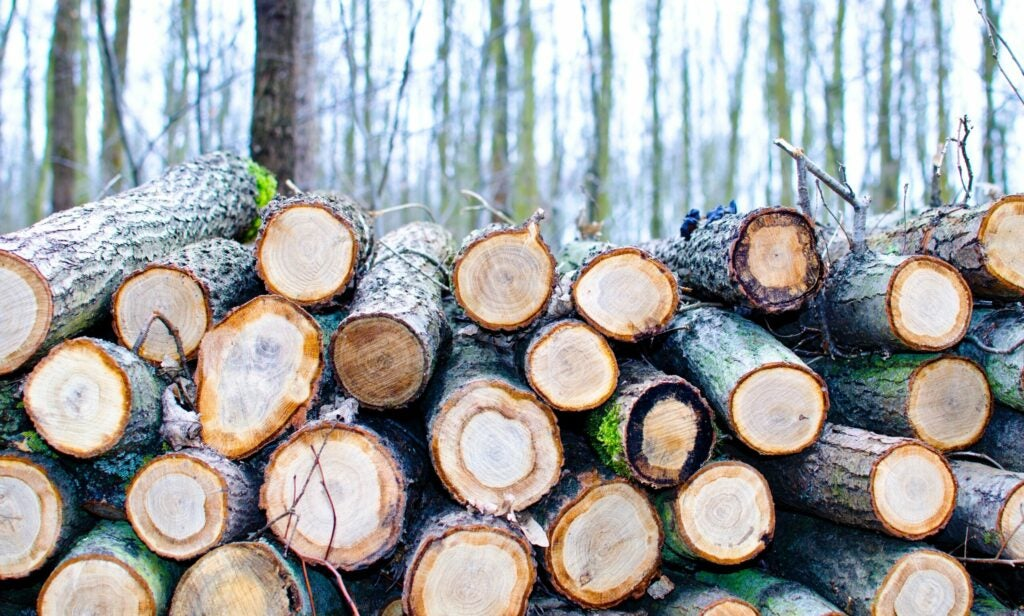 logs of timber stacked up