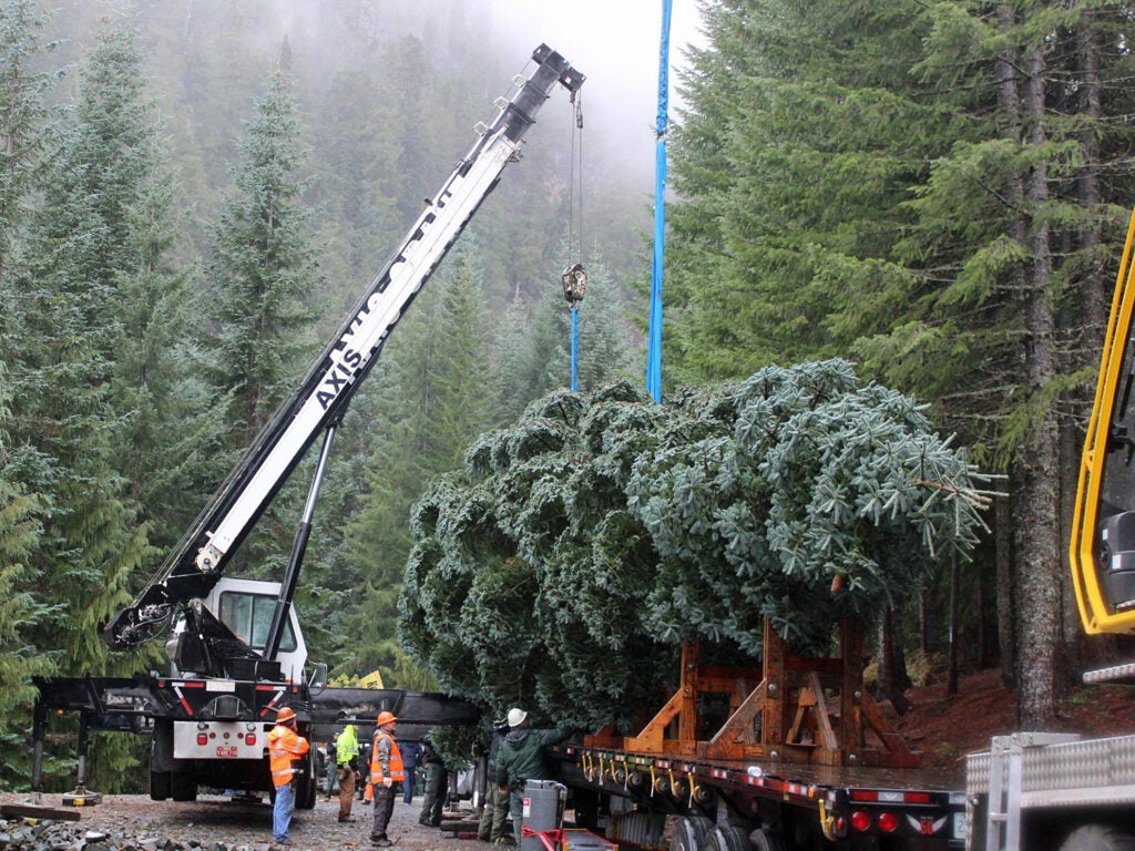 Cutting the 2018 Capitol Christmas Tree