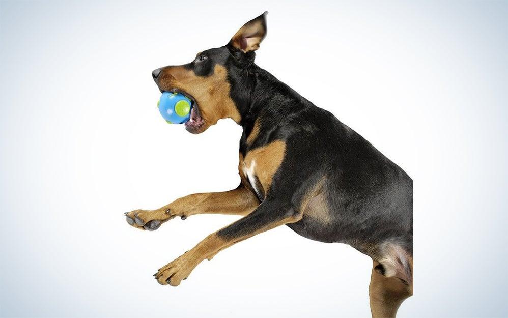 dog world ball