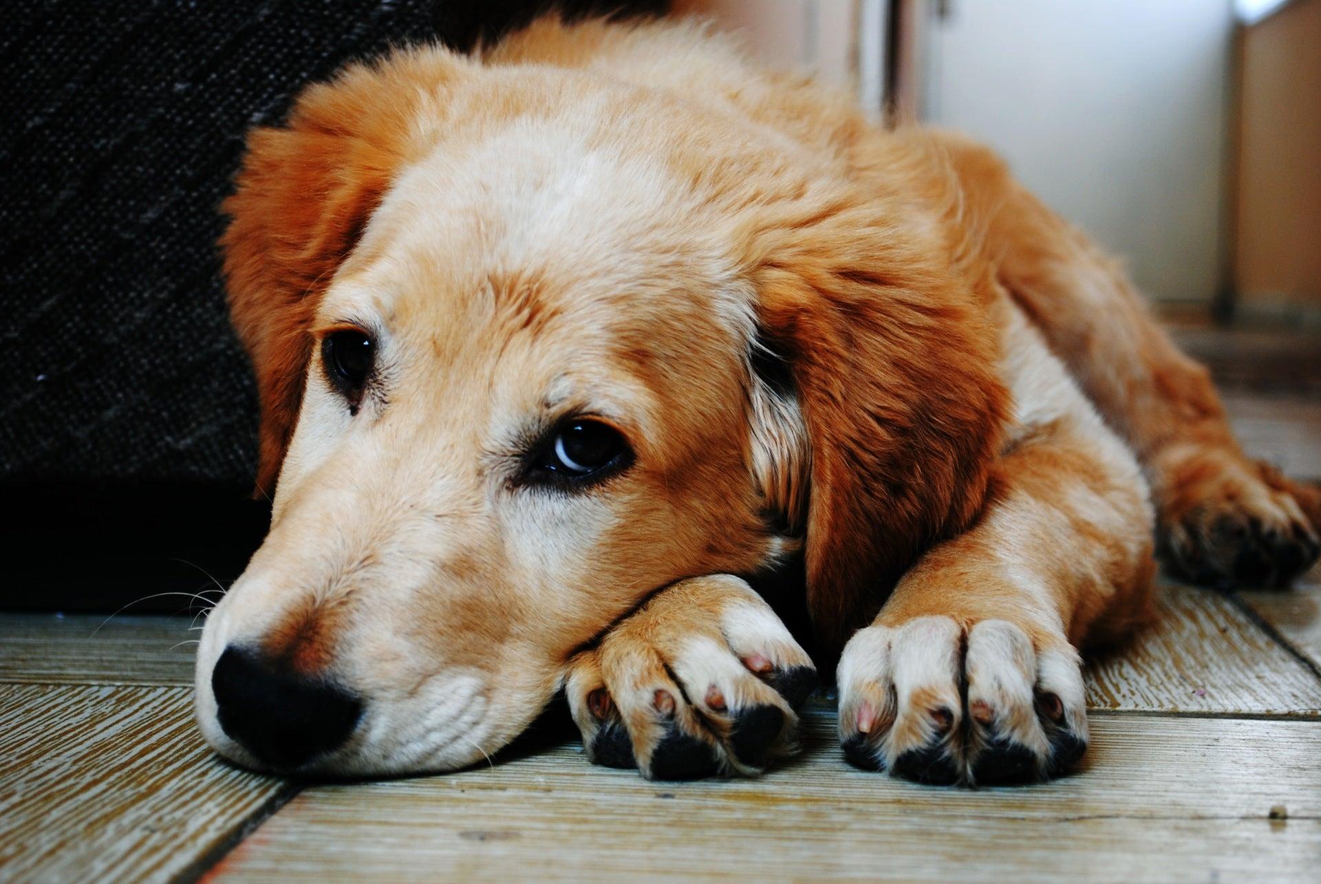 A very good dog