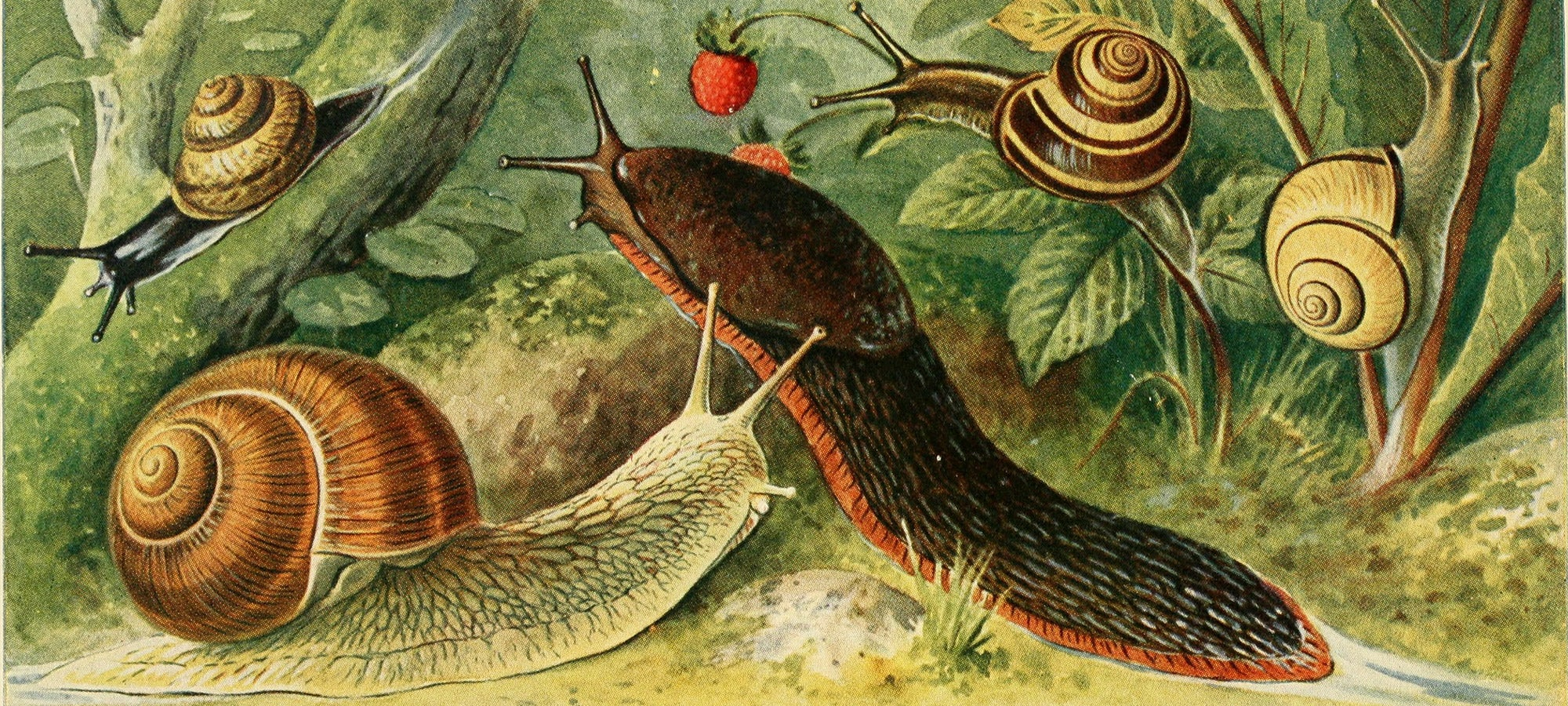 Sex, starvation, and saltwater moats: snail farms are wilder than you could ever imagine