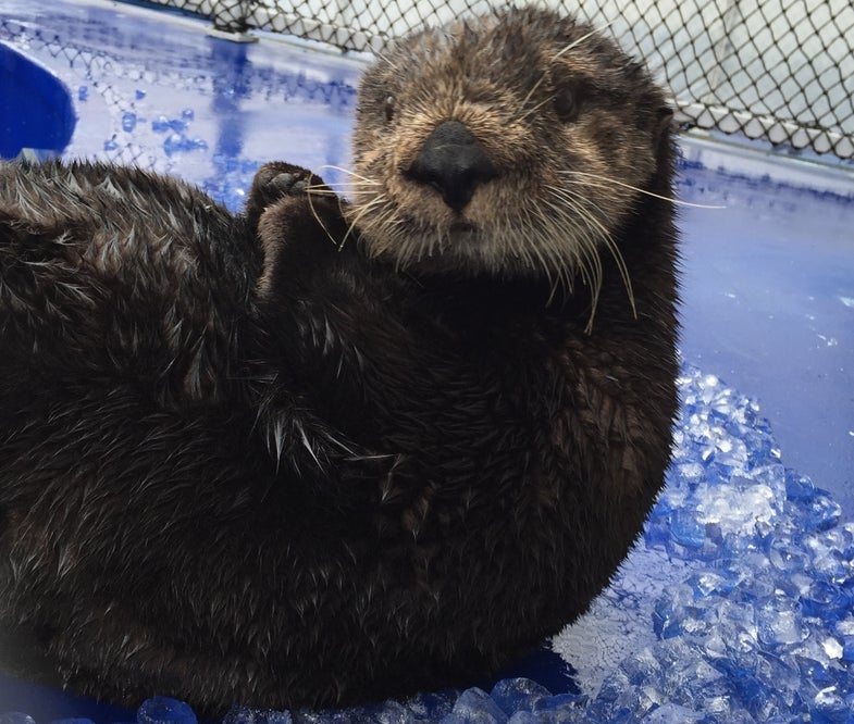 a sea otter