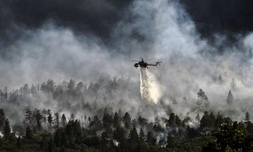 California's forest management isn't the problem