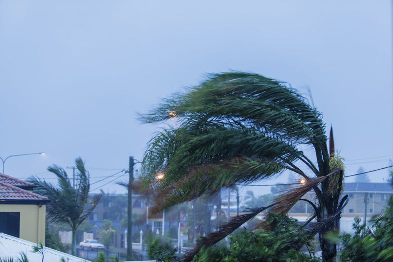 a palm tree bending in the wind