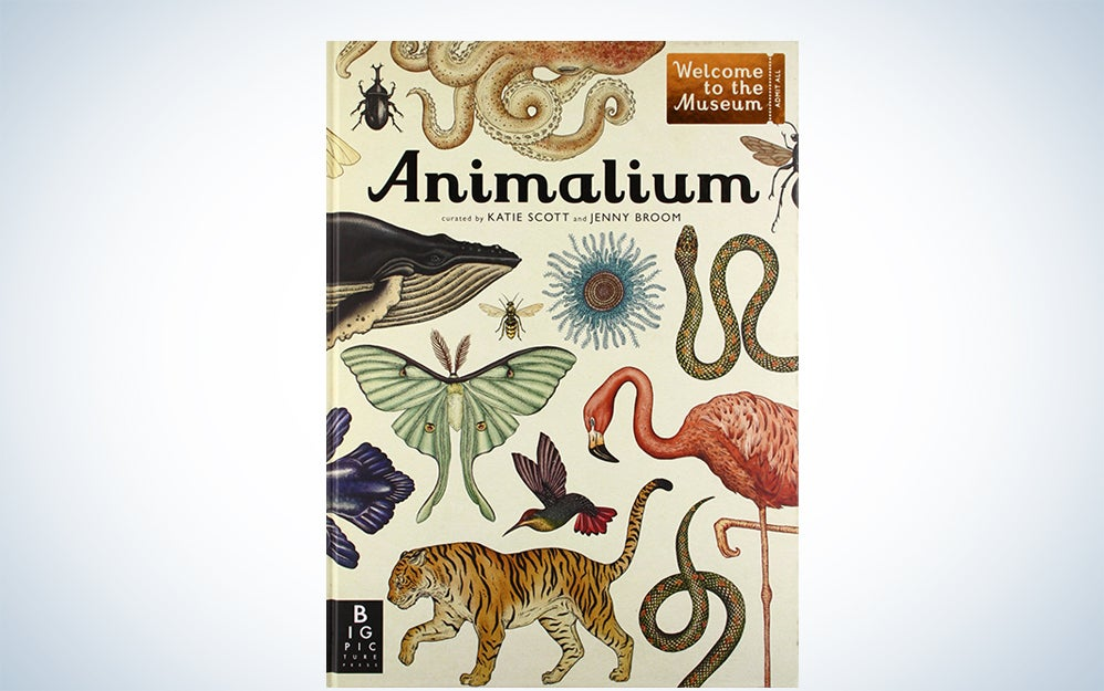 Animalium: Welcome to the Museum by Jenny Broom