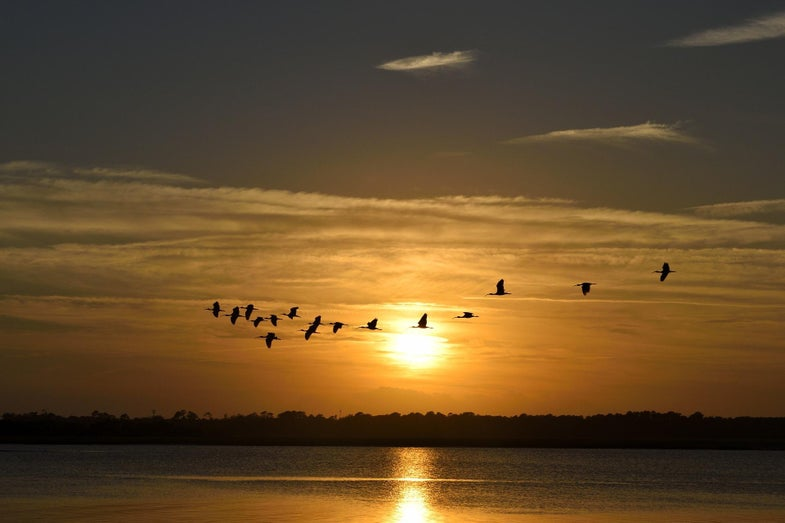 sunset birds migrating