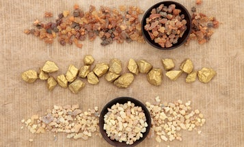 What are frankincense and myrrh, anyway?