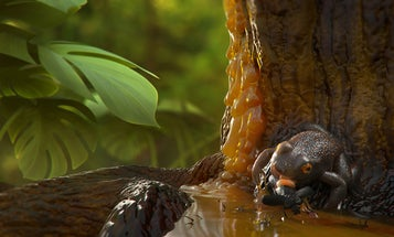 Tropical frogs were alive 99 million years ago, and we have the amber to prove it