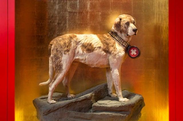 a taxidermy dog