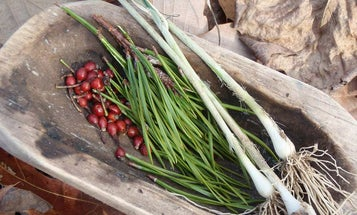 13 edible plants you can still find in the winter