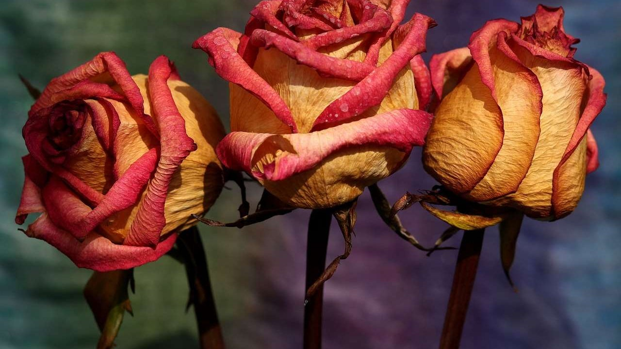 Dried roses and other preserved flowers