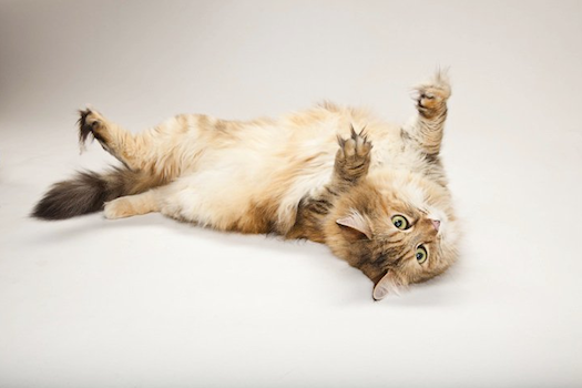 FYI: Can humans get high on catnip?