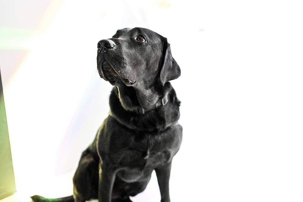 Nikon Z7 camera sample dog