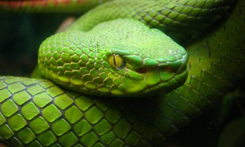 Why Doesn't Ireland Have Snakes?