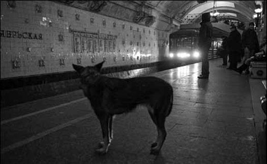 Moscow's Dogs Adapt to Ride the Subway
