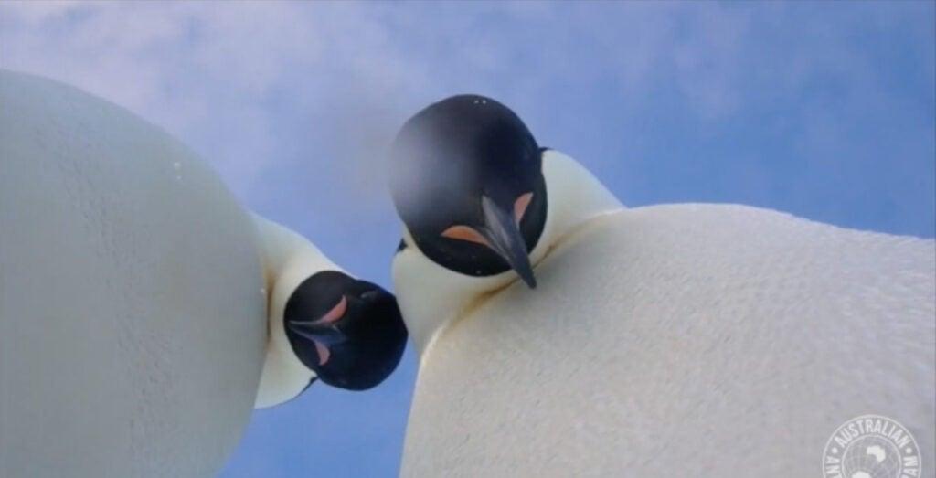 """Penguins"