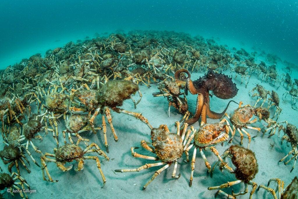 """""""Crab"""