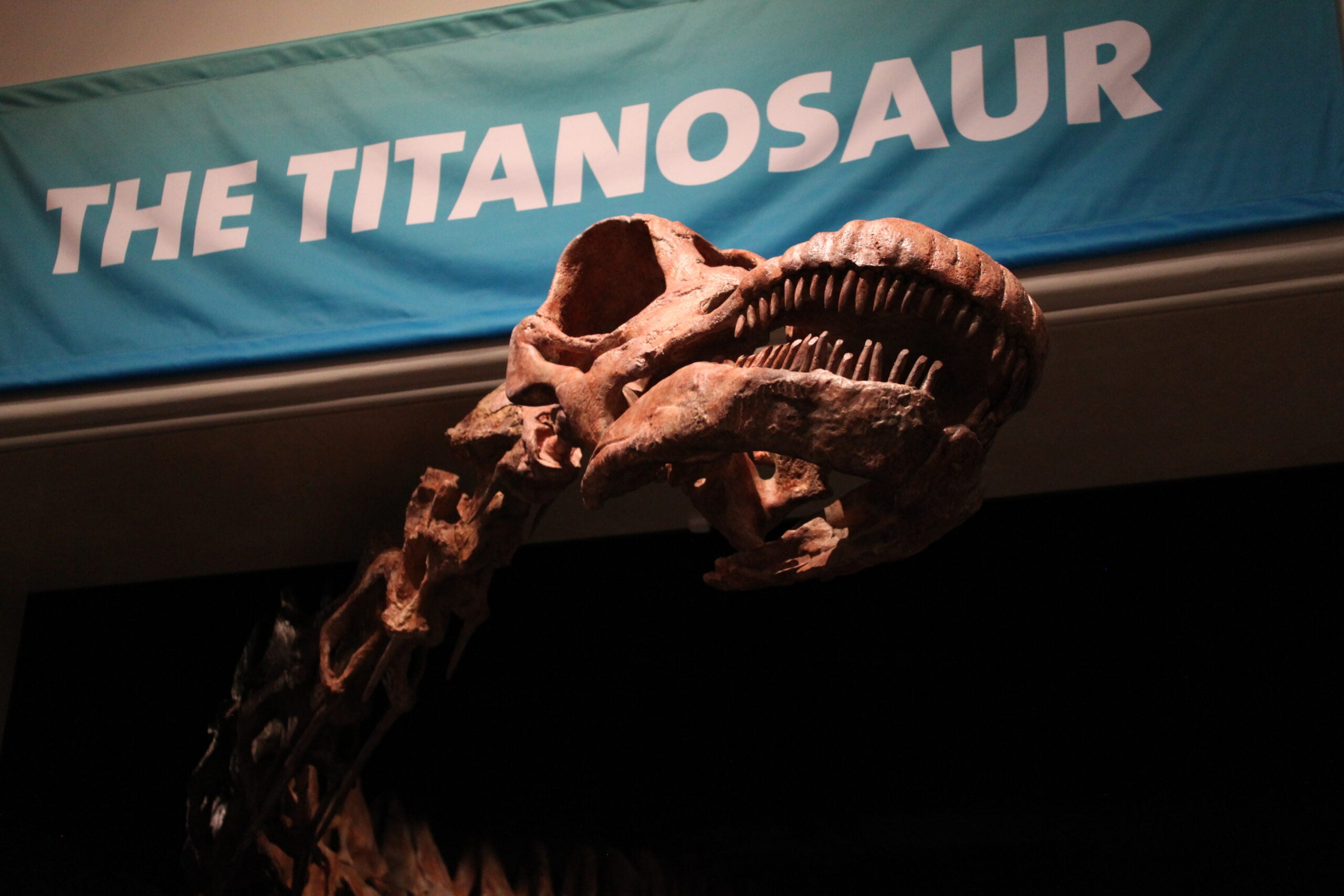 Seventy-Ton Titanosaur Unveiled At Museum Of Natural History