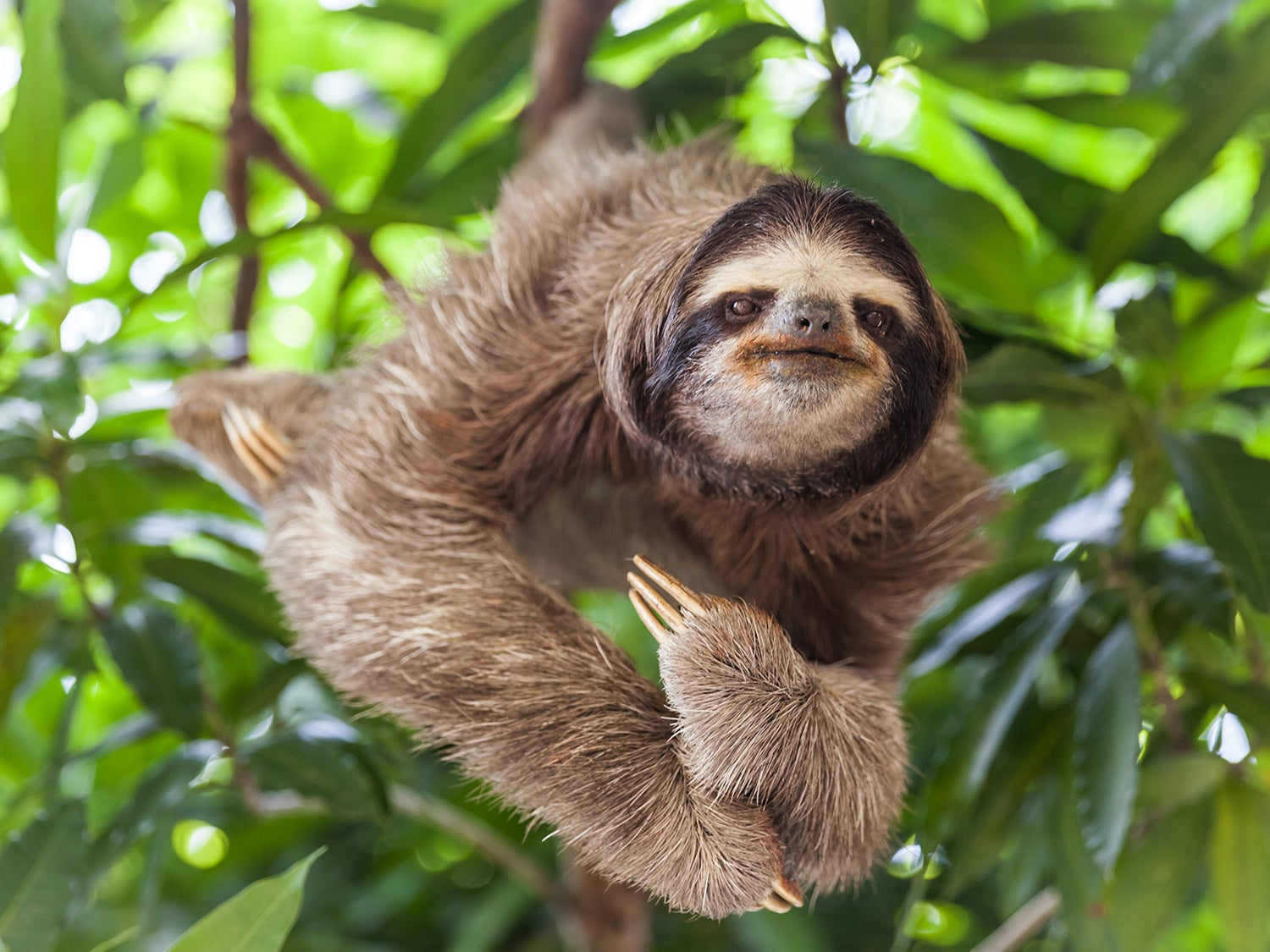 Face to face with the sloth