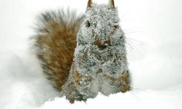 Do wild animals hate being cold in winter?