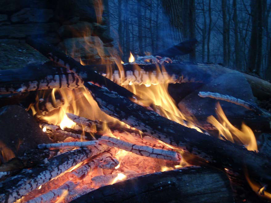 a lit fire in the woods