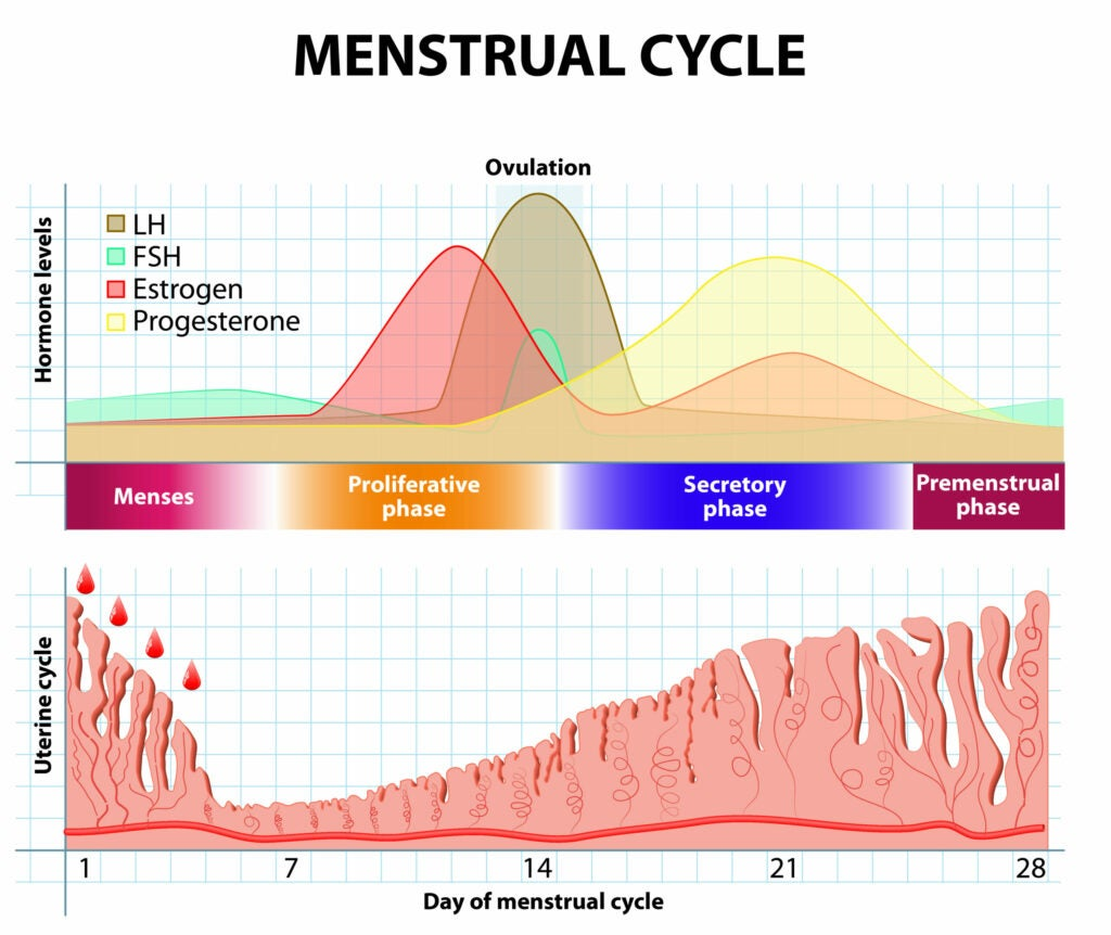 The natural menstrual cycle