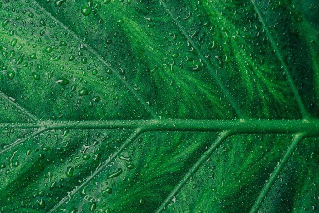 a close-up image of a green leaf