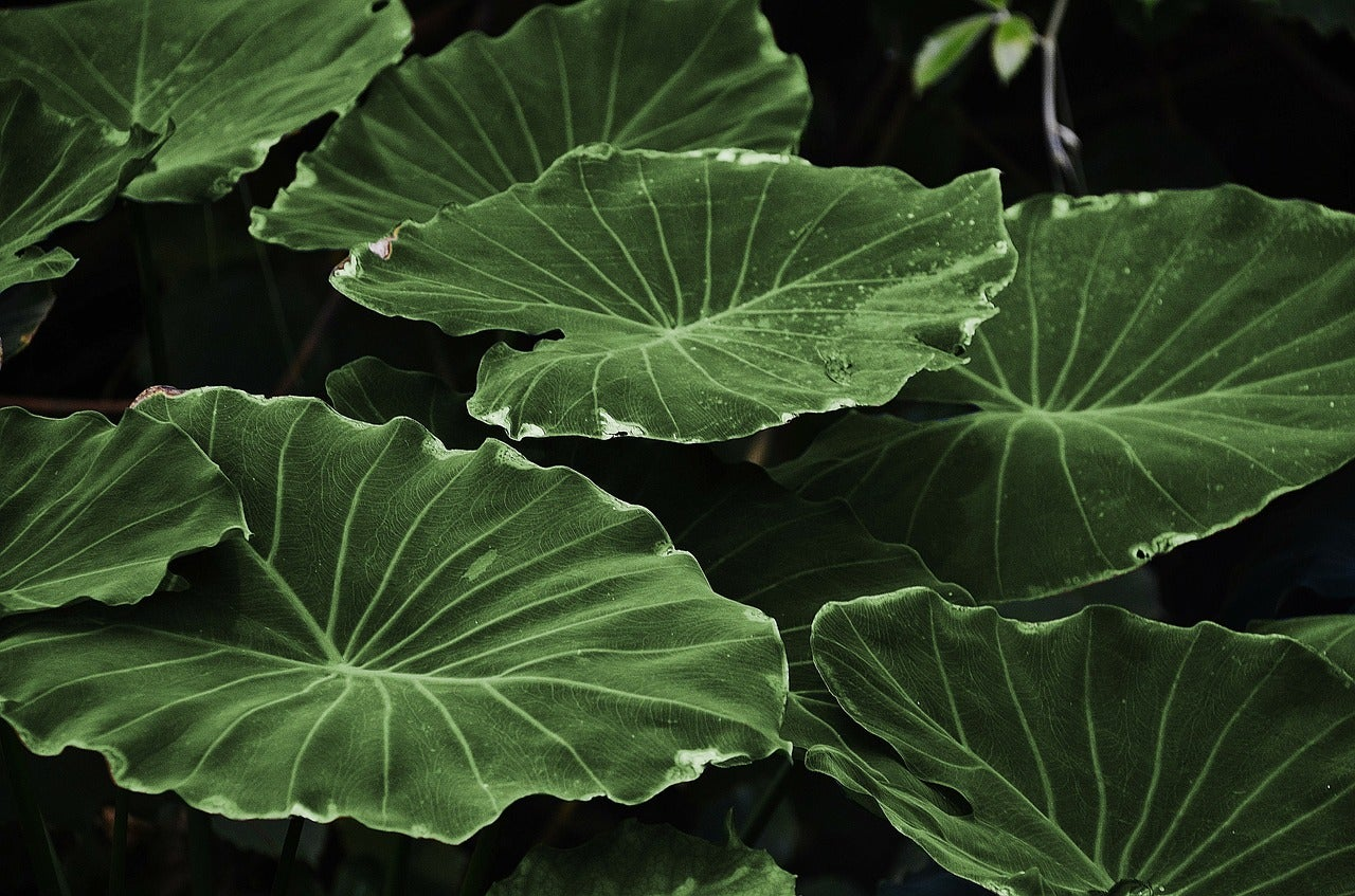 The bionic leaf seems poised to lead a fertilizer revolution
