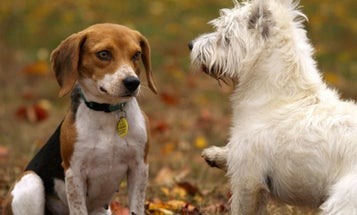 New study asks how your favorite doggos came to be
