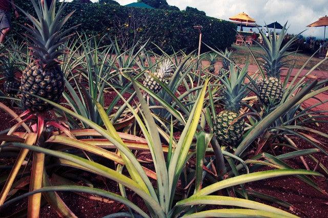 """pineapple"