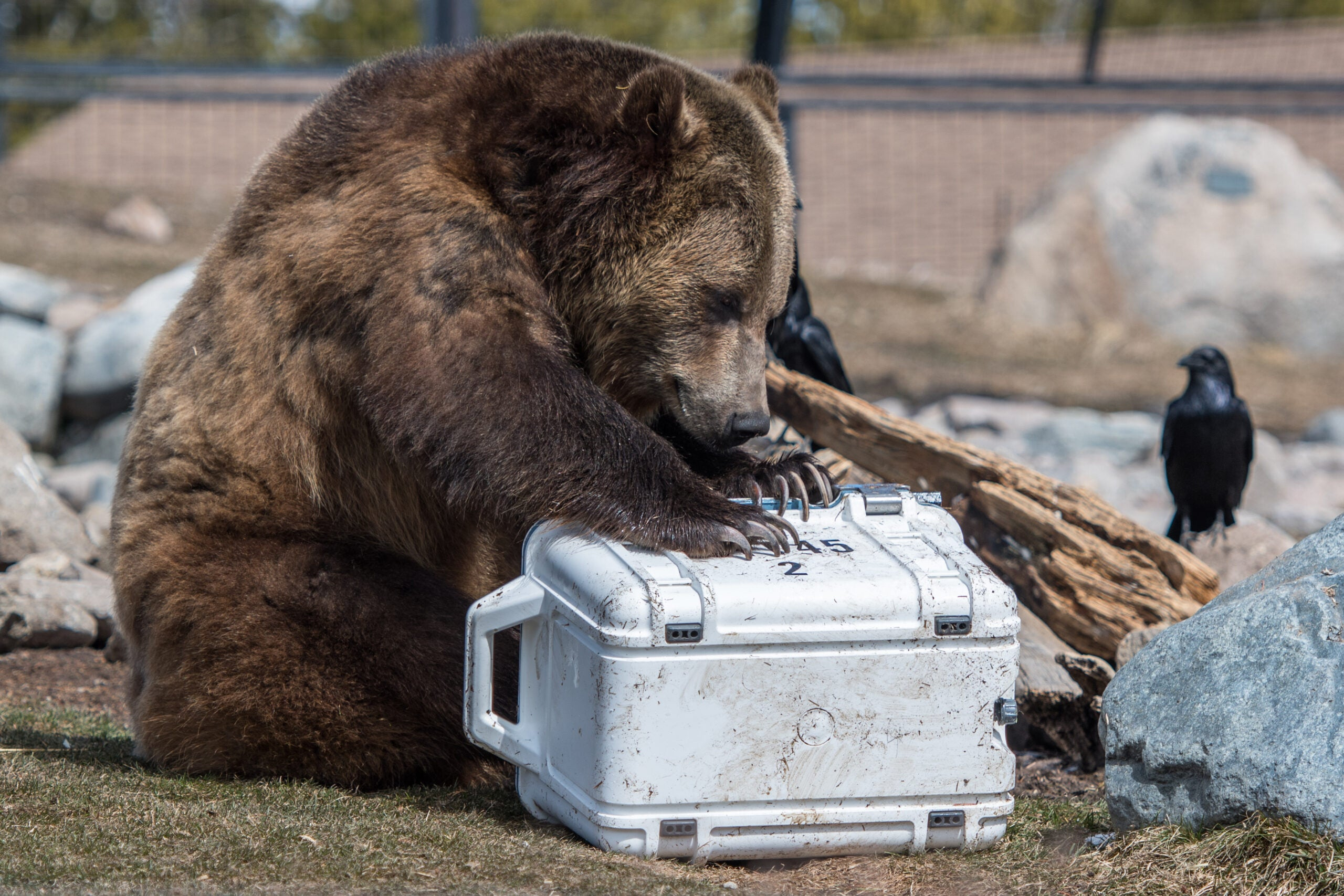 The week in tech: tunnels, coolers, and bears. Oh my.