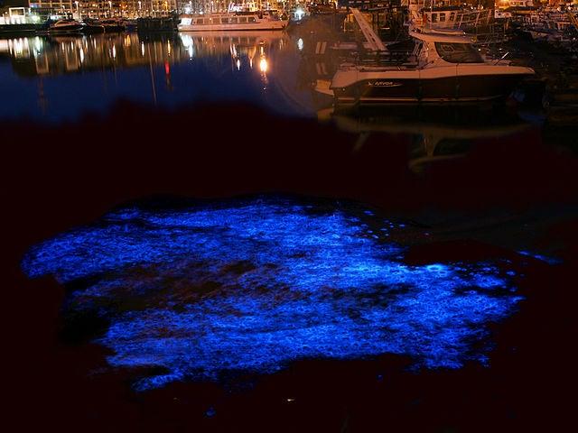 bioluminescence belgium