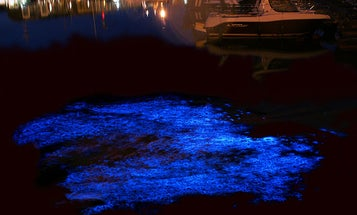 Tasmania's gorgeous, glowing water is a sign of something sinister