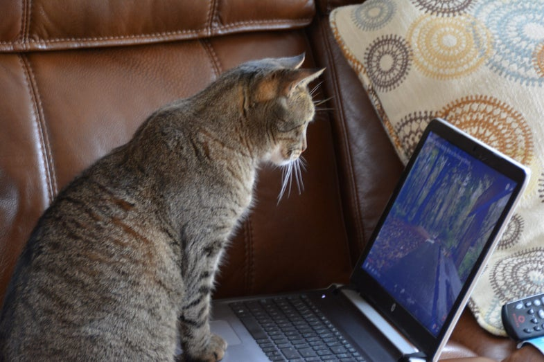 Cat at computer.