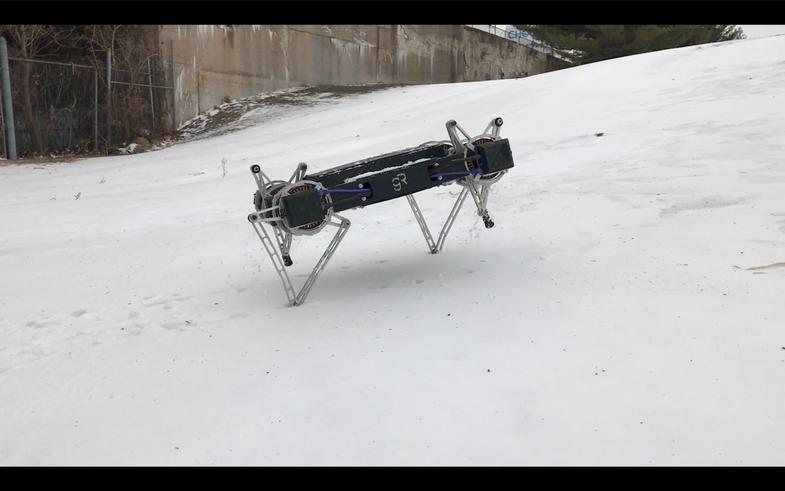 Minitaur in snow