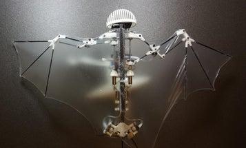 Bat Bot flies through the air on whisper-thin wings
