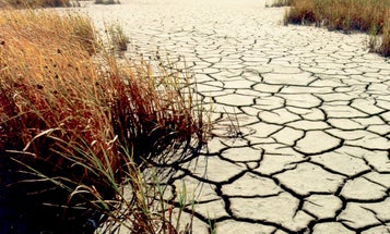 IBM Watson Can Help Find Water Wasters In Drought-Stricken California