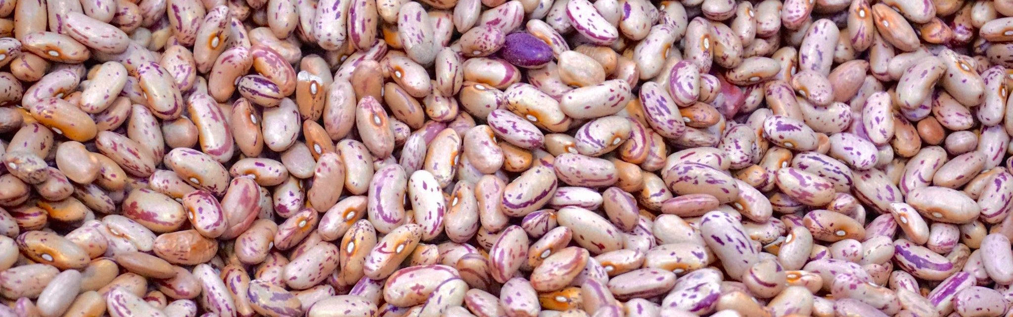 Replacing beef with beans could save the planet, because people farts are better than cow farts