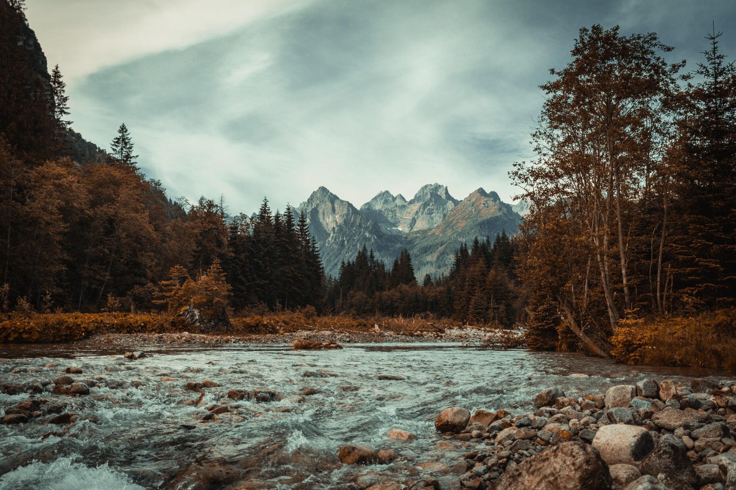 A stream in its natural habitat.