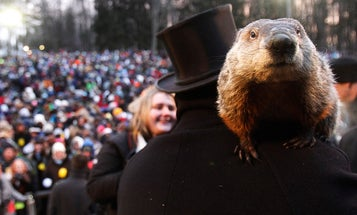 Groundhog Day is all about woodchuck sex