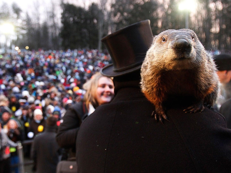groundhog on Groundhog Day